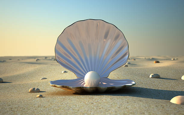 sea shell - animal shell stock pictures, royalty-free photos & images