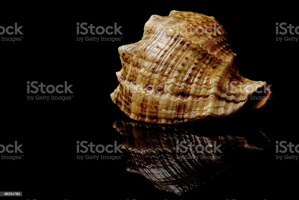 Conchas do mar - Foto de stock de Aberto royalty-free