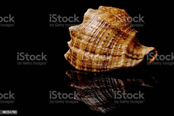 Foto de Conchas Do Mar e mais fotos de stock de Aberto