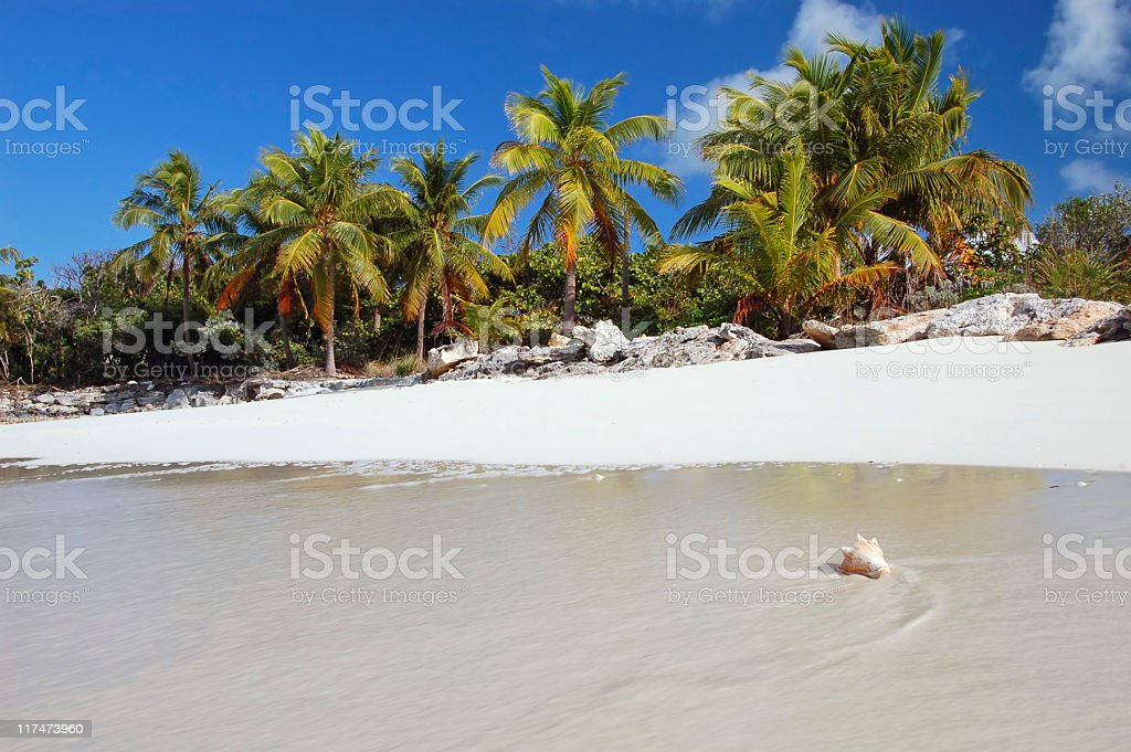Sea shell washes up on tropical shore stock photo