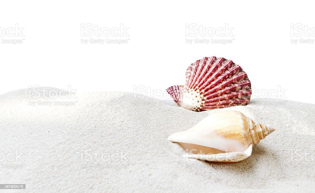 海の貝砂の上で、白背景 ストックフォト