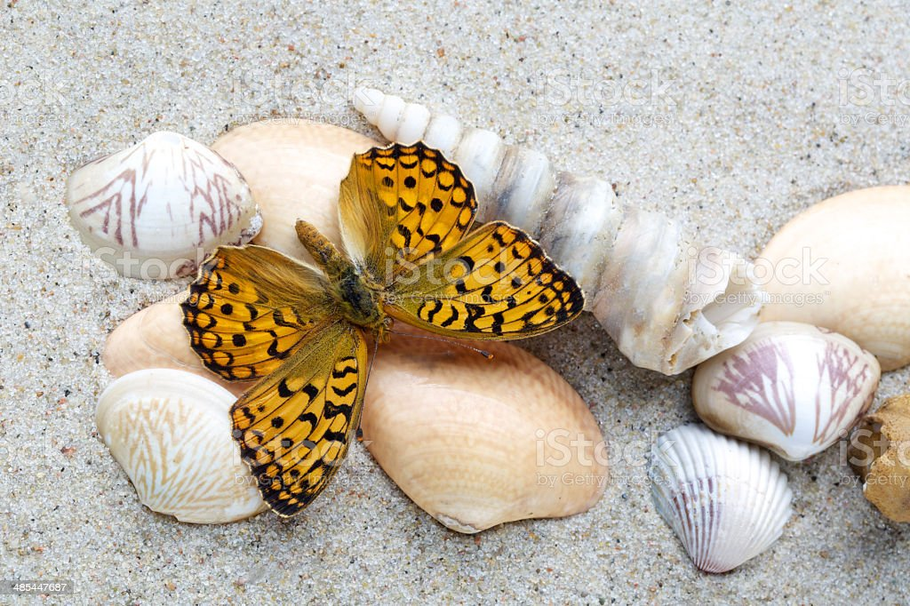 Conchiglie Di Mare E Farfalla Sulla Sabbia Sfondo Di Spiaggia Estate