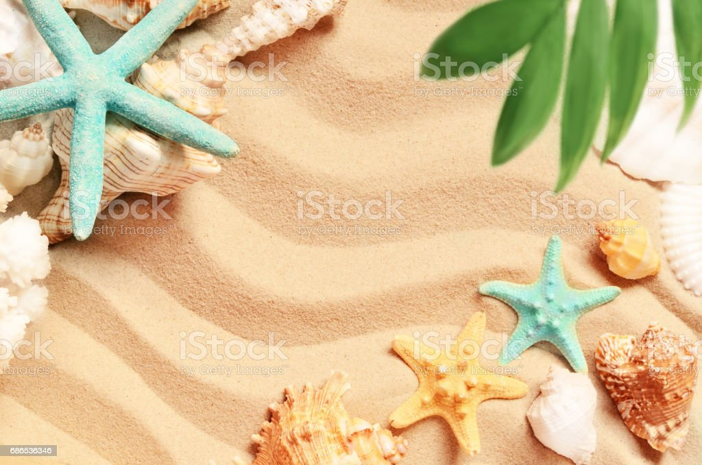 Snäckskal och palm på sand bakgrunden. Sommar strand. royaltyfri bildbanksbilder
