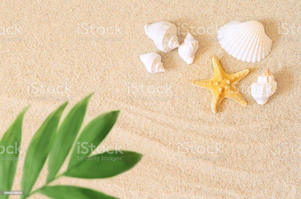 Coquillages et palm sur le fond de sable. Plage d'été. photo libre de droits