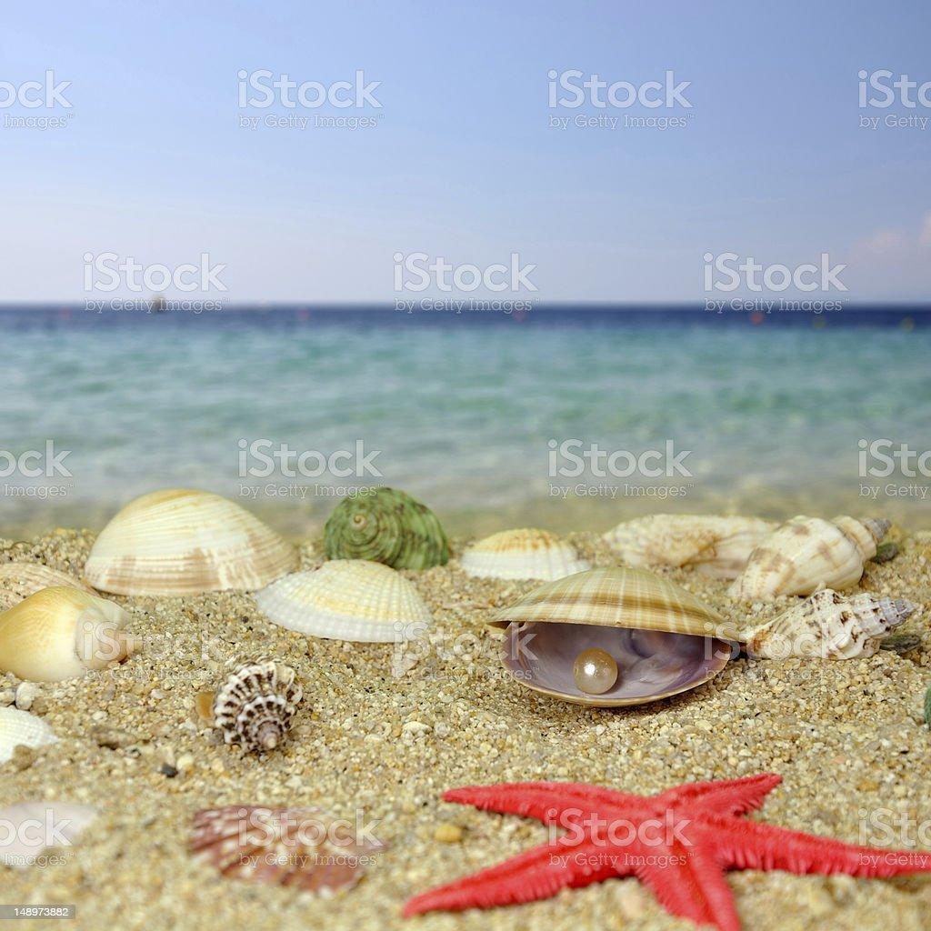 Sea shells and perls stock photo