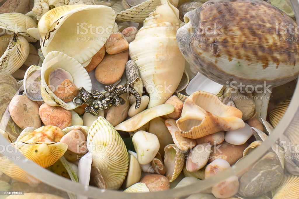 sea shells and stones in the water, close-up stock photo