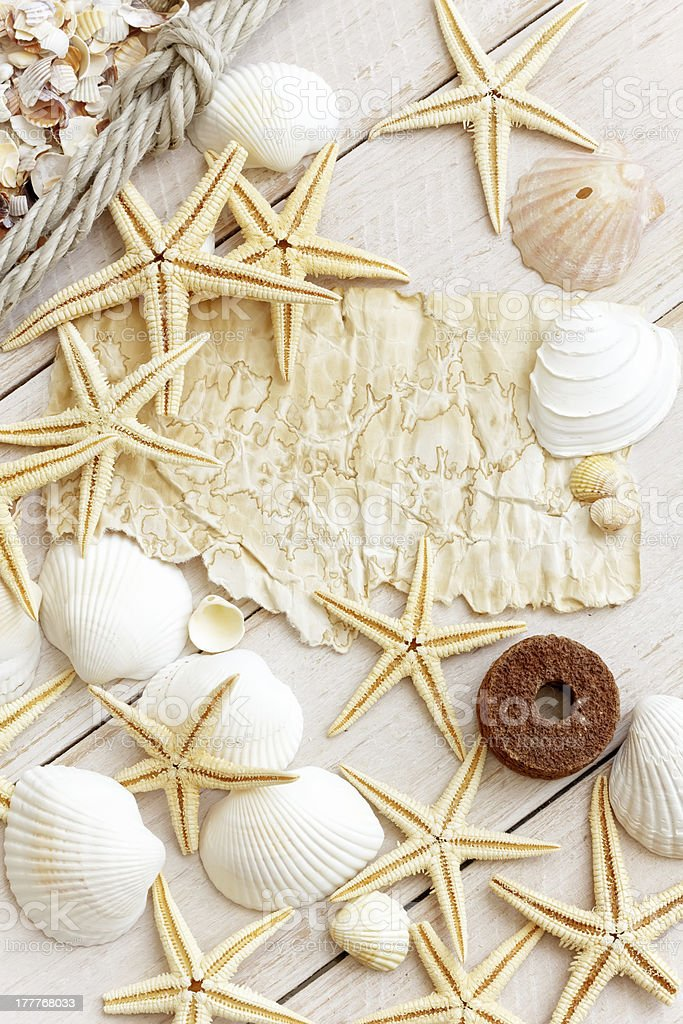 Sea shells as background royalty-free stock photo
