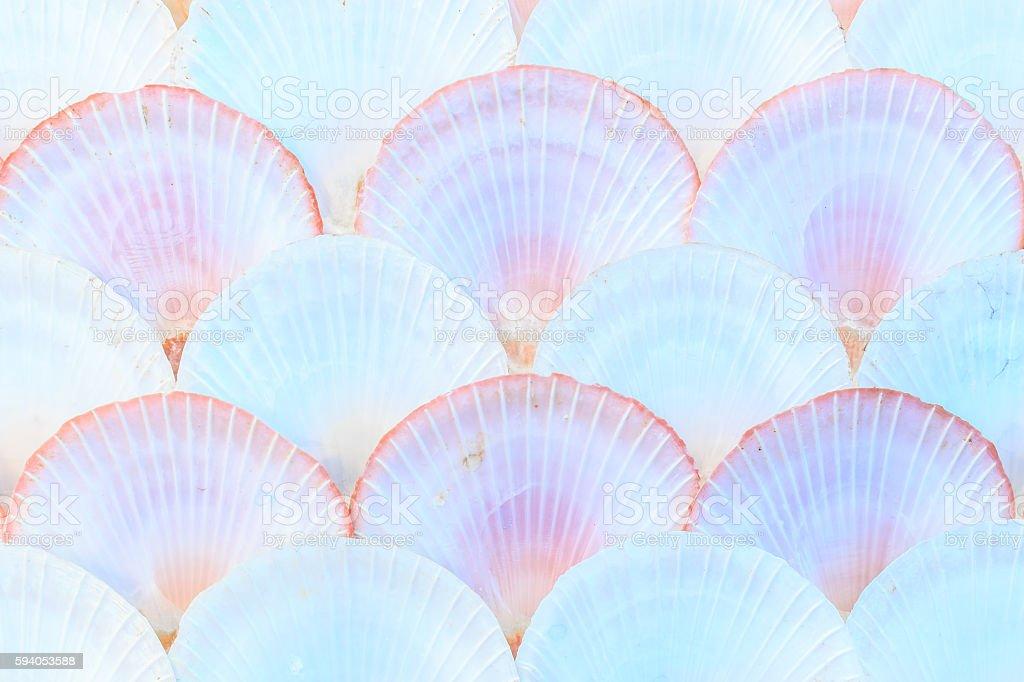 Sea shells Background stock photo