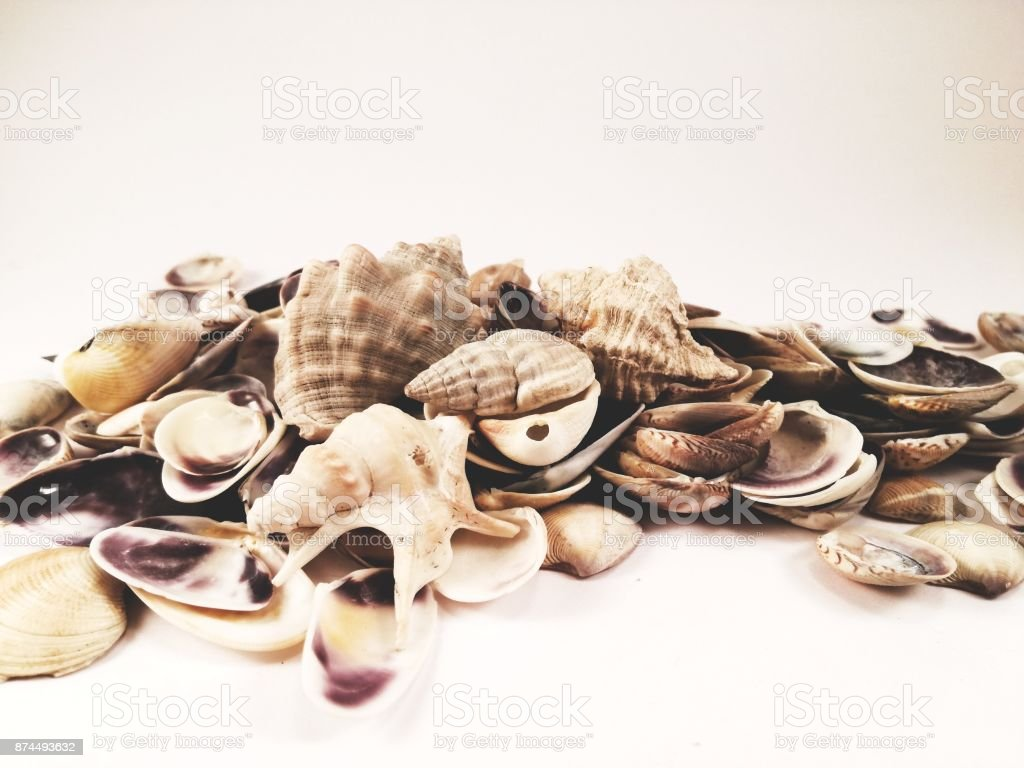Sea shells in a bunch stock photo