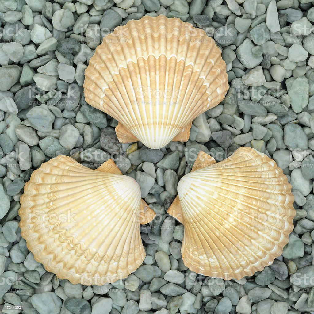 Sea Shells in Circle on Green Pebble Background, Close Up royalty-free stock photo