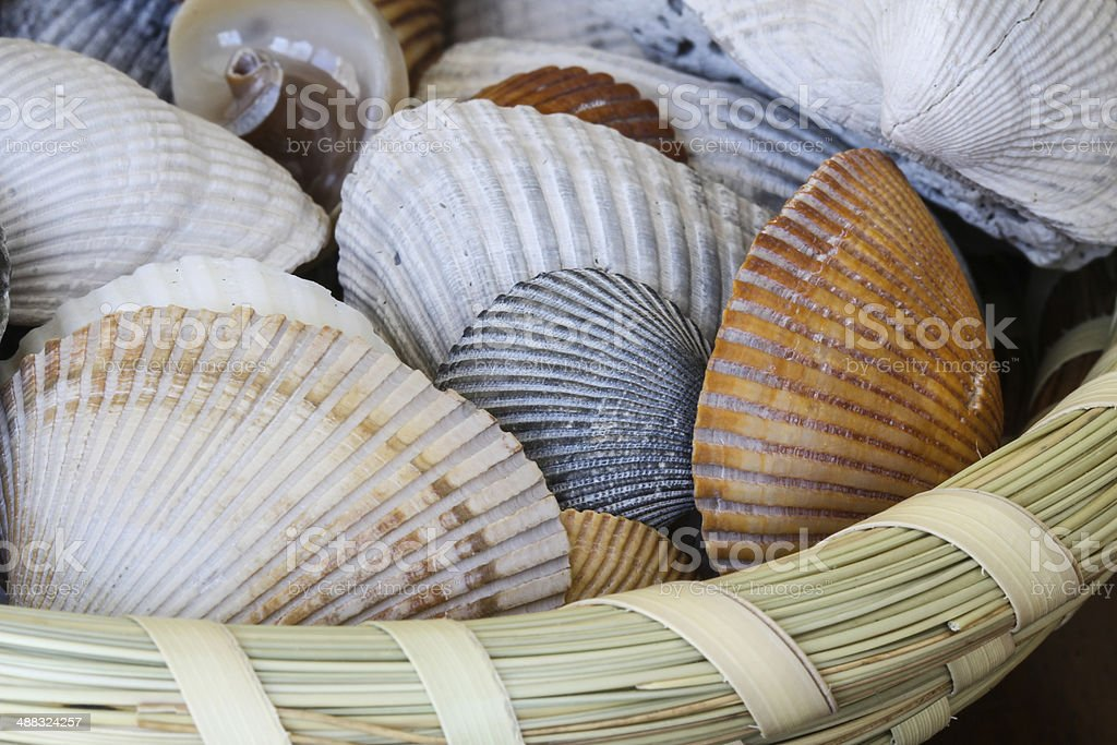 Sea Shells in Sweetgrass Basket stock photo