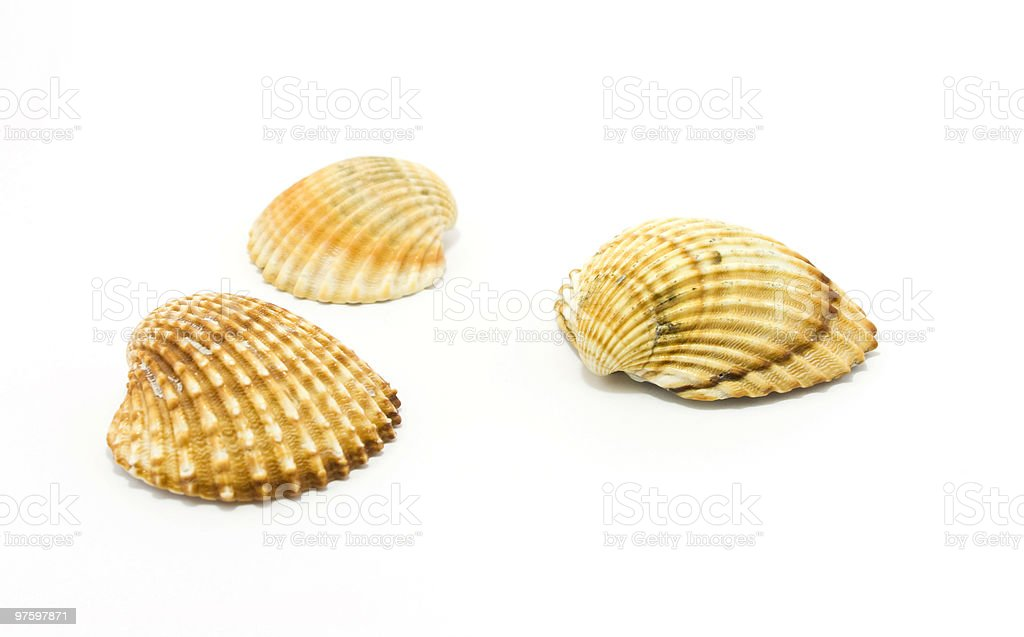 sea shells isolated on white royaltyfri bildbanksbilder