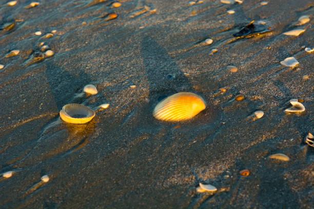Sea shells line the beach stock photo