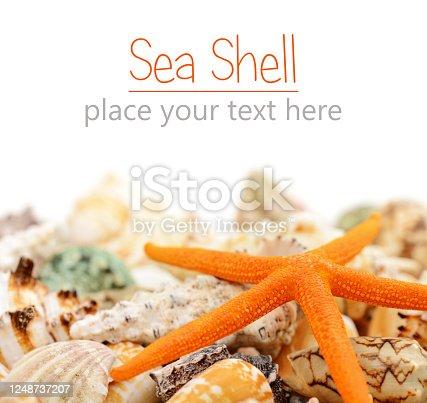 sea shells on a white background