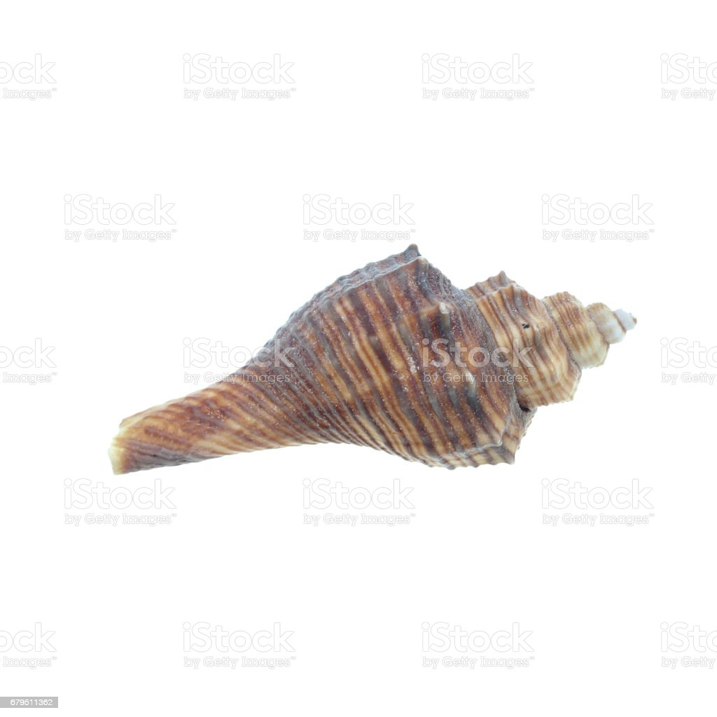 Sea shells on a white background. royalty-free stock photo