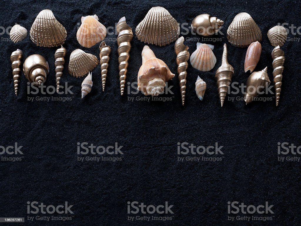Sea Shells on Black Sand stock photo