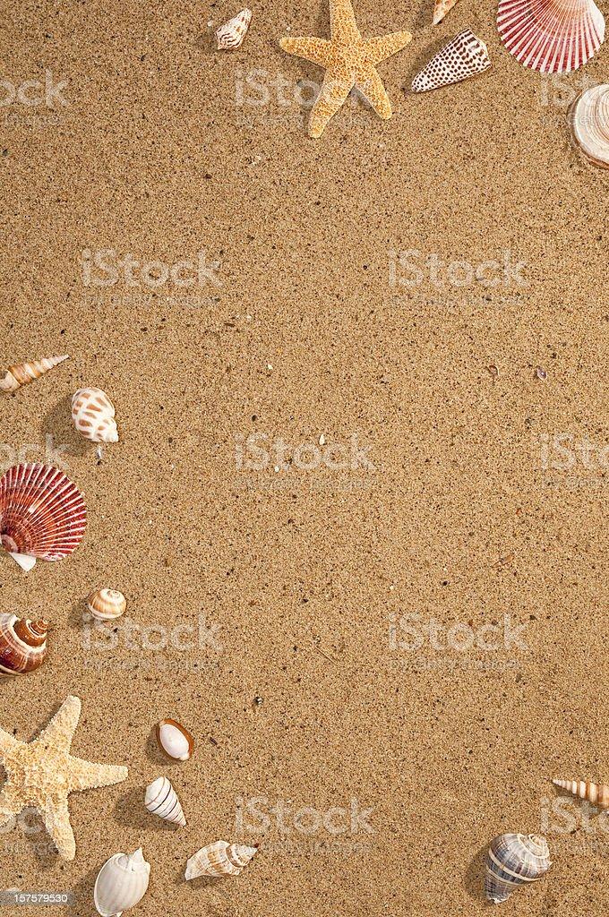 Sea Shells On Sand stok fotoğrafı