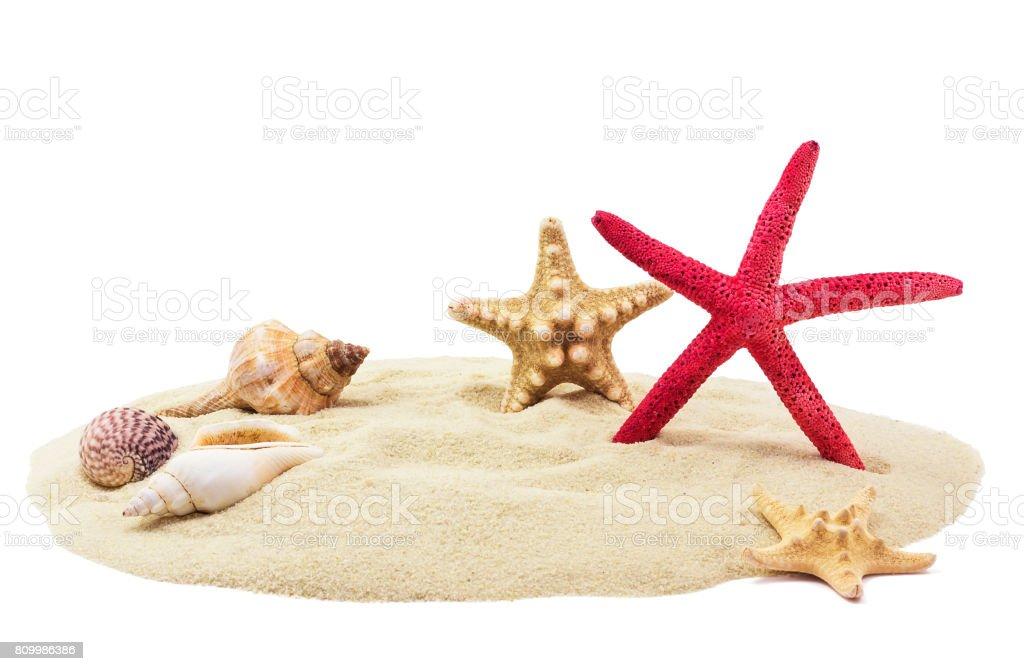 Deniz kabukları kum üzerinde stok fotoğrafı