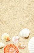 Sea shells on sandy beach. Summer background. Top view.