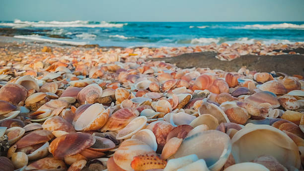 sea shells on the beach - pink and orange seashell background stockfoto's en -beelden