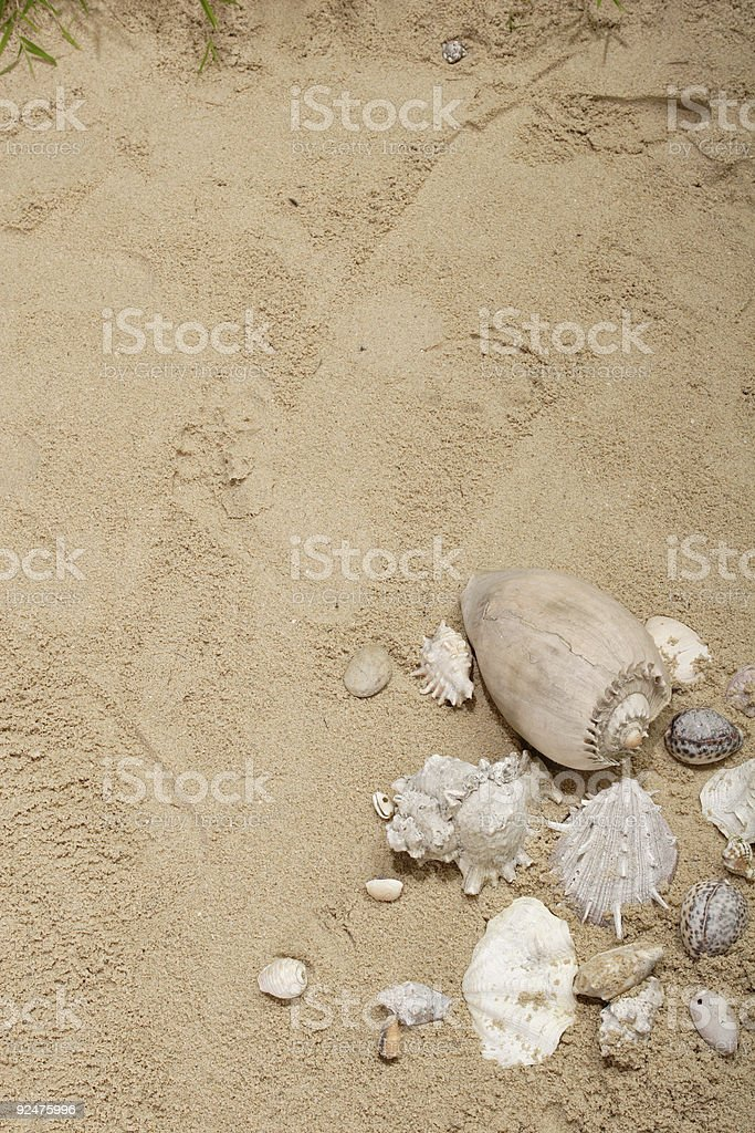 sea shells on the sand royalty-free stock photo