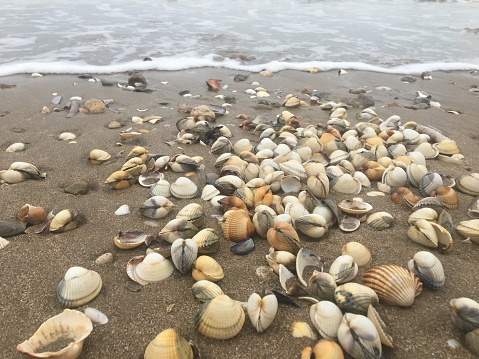 Sea shells in the beach
