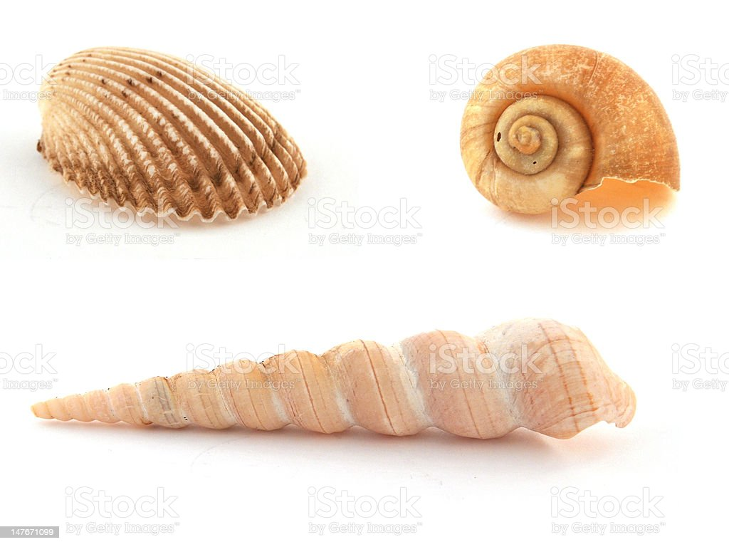 Sea Shells royalty-free stock photo