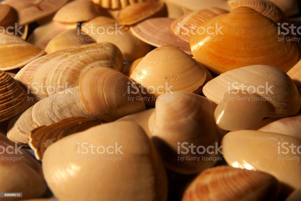 Sea Shells Стоковые фото Стоковая фотография