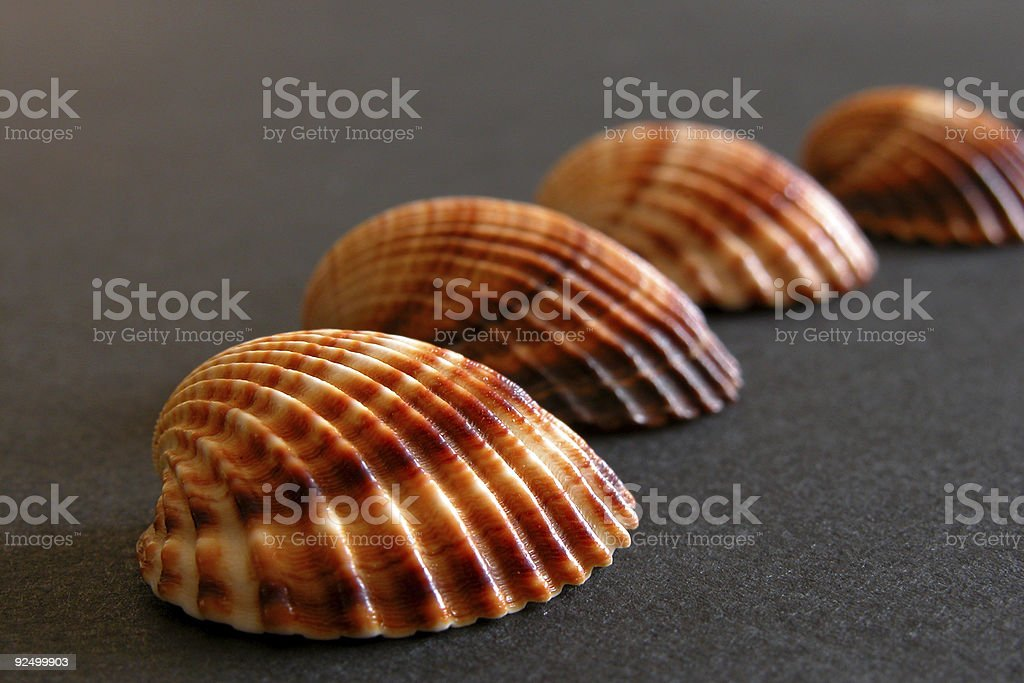 Sea Shells. royalty-free stock photo