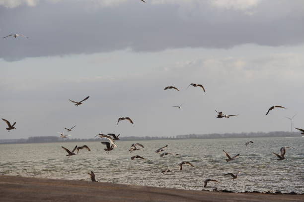 Sea side views of beach, seagulls, boats and historic sites stock photo