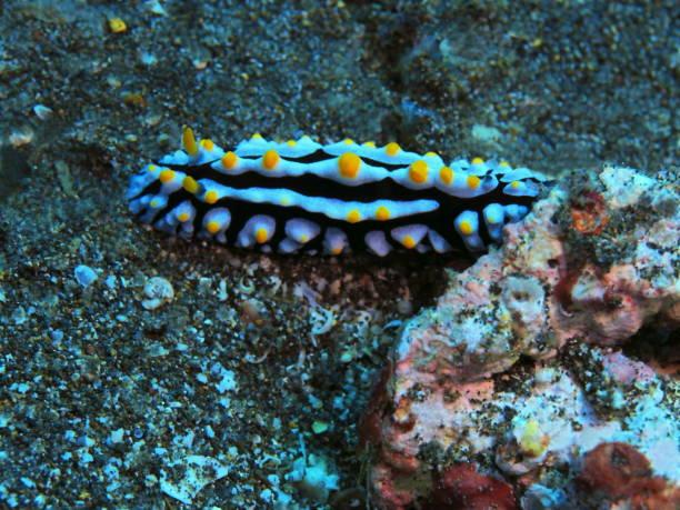 Sea slug stock photo