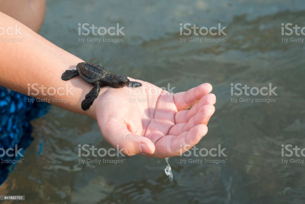 Sea small turtle on hand stock photo