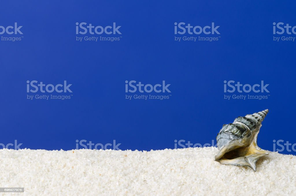 Sea snail shell on white sand with ultramarine background stock photo