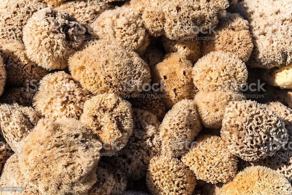 Sea Sponge stock photo