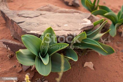 Life in the desert, Fresh shoots in the desert