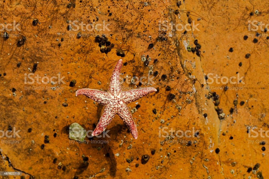 sea star Galleggiare sull'acqua - foto stock
