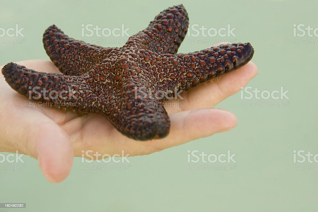 Sea star in hand stock photo