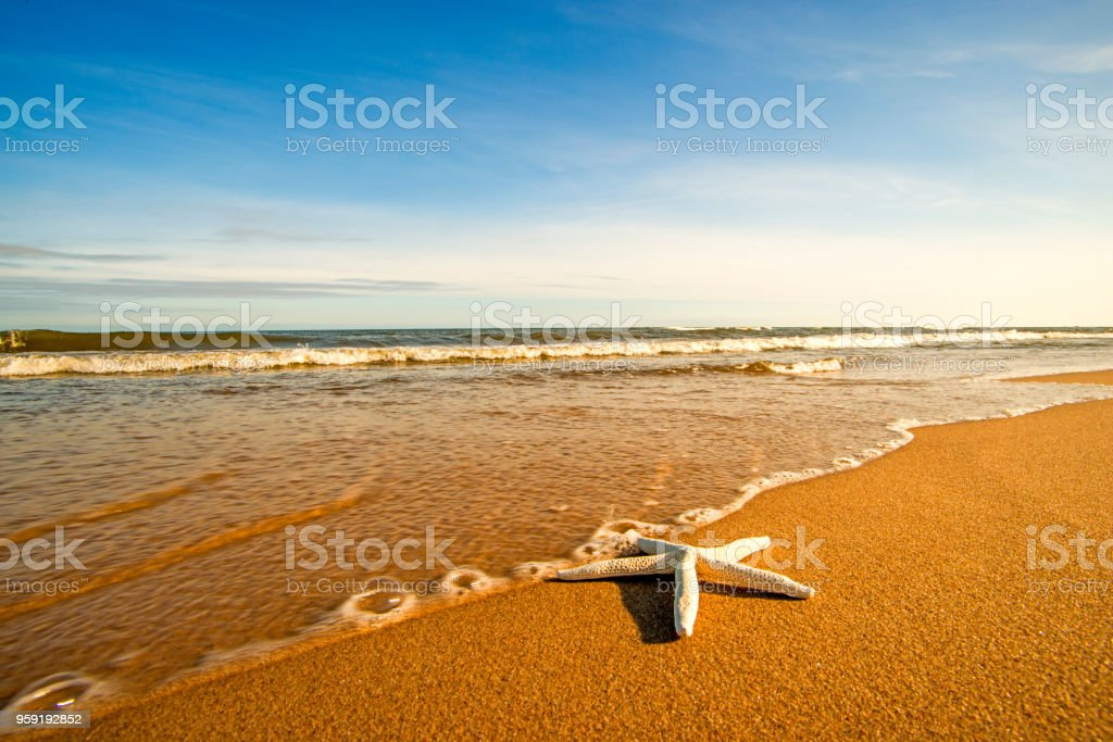 Sea star on a beach with surf stock photo
