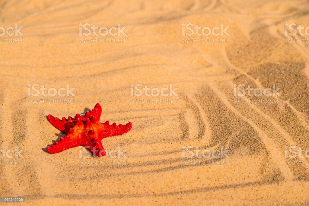 Sea star on a sandy beach - Royalty-free Animal Stock Photo