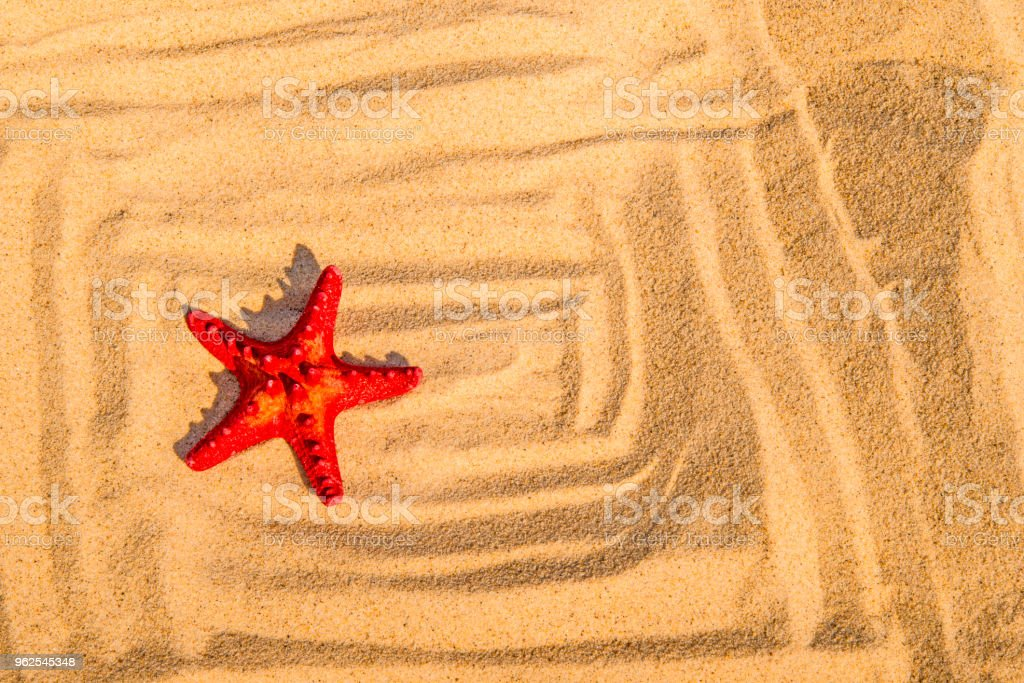 Estrela do mar em uma praia de areia - Foto de stock de Animal royalty-free