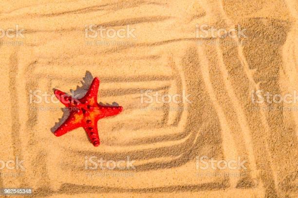 Foto de Estrela Do Mar Em Uma Praia De Areia e mais fotos de stock de Animal