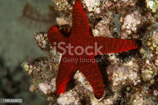 colorful sea star on the ocean floor, underwater