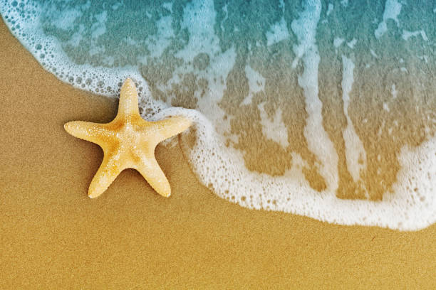 Sea star or starfish on sandy shore after the tide. Flat lay style. stock photo