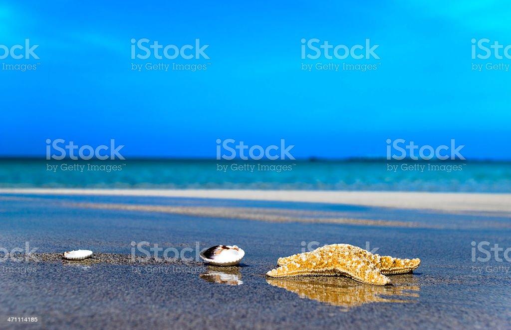 Sea star royalty-free stock photo