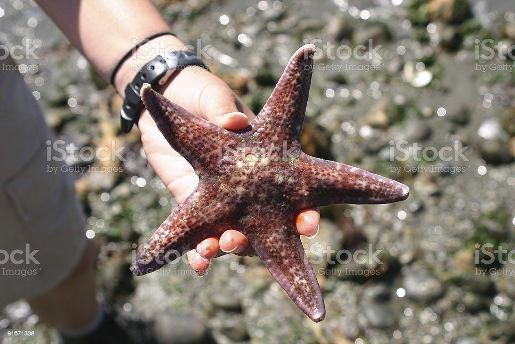 Sea star stock photo