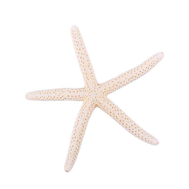 Sea starfish on a white background picture id695555214?b=1&k=6&m=695555214&s=612x612&w=0&h=mwqwqufvoldmsblfnnbdfy2rqus9lip8eqwzee387ks=