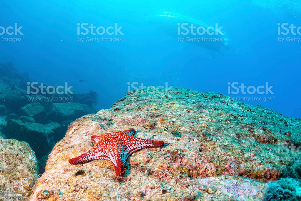 sea stars in a reef colorful underwater landscape background stock photo