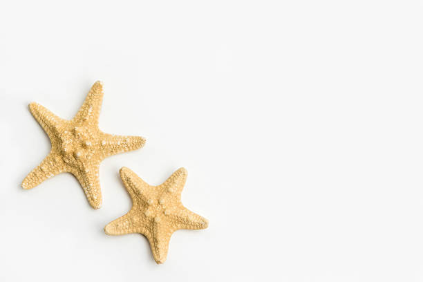 sea stars isolated on white background - zeeschelp stockfoto's en -beelden