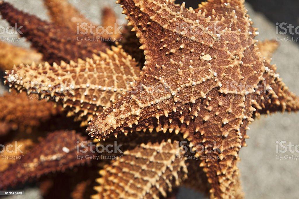 Sea Stars royalty-free stock photo
