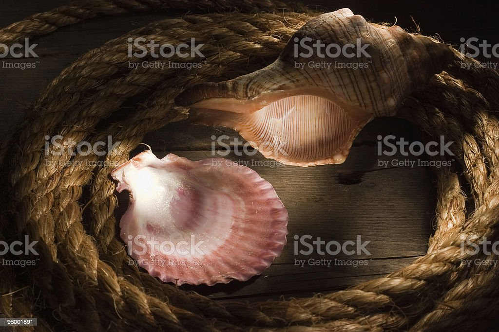 Sea still-life royalty-free stock photo